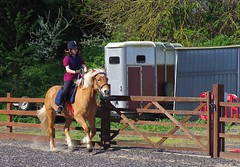 Phoebe on a canter today.... (favmark1) Tags: phoebe max canter riding horse stables 2017 365 365challenge day97