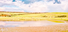 The Puddle (Francesco Impellizzeri) Tags: brighton england puddle park clouds