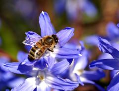 It is spring (Jaedde & Sis) Tags: spring blue beginnerdigitalphotographychallengewinner bdpc