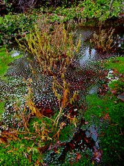 Boggin' III (Chancelrie) Tags: outdoor plant pacificnorthwest vancouver britishcolumbia kitsilano