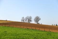 Limburgs landschap (M'heer) (ToJoLa) Tags: canon canoneos60d voorjaar lente spring zuidlimburg limburg zon wandeling ontrack kleuren landschap landscape uitzicht bloem heuvelland boom bomen gras groen mheer
