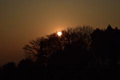 20170329_002_2 (まさちゃん) Tags: 夕陽 シルエット silhouette 樹木 夕暮れ時 羽沢