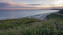 Tregantle Sunset (jedlangdon) Tags: ocean pink flowers sunset sea cliff colour beach landscape outdoors coast countryside sand nikon cornwall whitsandbay southcoast goldenhour tregantle tokina1116mm nikond7000