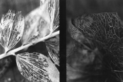 Study of vegetal (.kizARt. photography) Tags: camera old b bw white black macro film beautiful architecture night composition pen work lens photography lights photo flickr noir day photographie shadows pics lumire w picture n first pic olympus nb ombre jour iso study photograph f plus ft mm asa illford et nuit blanc fp4 zuiko 38 125 38mm