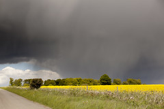 Shower curtain | Bibury and Coln St Aldwyns - 23 (Paulo Dykes) Tags: road trees rain yellow clouds shower driving cotswolds gloucestershire rapefield