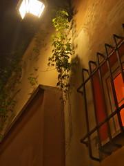 plants (Darek Drapala) Tags: street old city light plants plant color building architecture night buildings dark lumix europe poland polska panasonic warsaw g2 oldtown warszawa panasonicg2