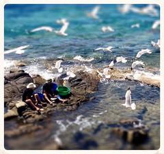 mini fishermen () Tags: sea seagulls fish beach work miniature fishermen