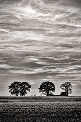 Horizons New (JonCoupland) Tags: trees summer cloud white black green nature grass sunshine boston outside photography jon sunny lincolnshire fields ipswich coupland copdock fishtoft