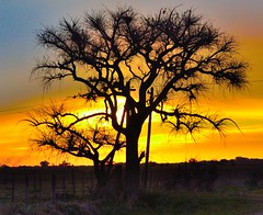 arbol atardecer atalaya (Agus_Chilingo) Tags: nature argentina night landscape photography nikon buenos aires campo atalaya naruraleza d3100 s8200