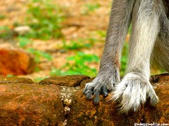 "sus patitas peludas • <a style=""font-size:0.8em;"" href=""http://www.flickr.com/photos/92957341@N07/9166329798/"" target=""_blank"">View on Flickr</a>"