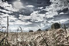 Weizen 2_HDR (peter pirker) Tags: sky cloud canon landscape austria sterreich himmel wolken krnten carinthia landschaft dri hdr dynamik weizen seeboden peterfoto eos550d peterprirker