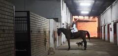 'super horse' (Jocketta Hidalgo) Tags: horse caballo spain great almirante rider equestrian superhorse equine kw picadero equino