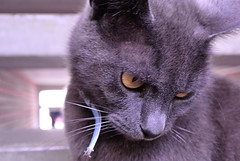 Kitty (Chris Wielenga) Tags: pet netherlands animals cat nikon whiskers poes friesland leeuwarden