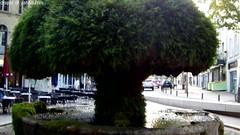 la fontaine moussue de Salon de Provence (Dominique Lenoir) Tags: france mushroom fountain video brunnen fuente salon provence fontana fontaine champignon bron southfrance bouchesdurhne salondeprovence 13300 fontainemoussue dominiquelenoir