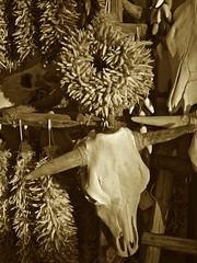 Ristras and skulls (mar-itz) Tags: chile red plant newmexico santafe southwest animal skull tourist bull souvenir bones dried ristra redchile