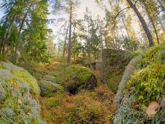 Metsss5 (MikeAncient) Tags: trees tree rock stone forest suomi finland rocks stones wideangle boulder fisheye boulders puu kivi hdr mets porvoo puita blkulla puut kivet tonemapped tonemap handheldhdr siirtolohkare kalansilm gddrag blkullaartweekend