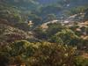Texas Whitetail Hunt & Exotics - Kerrville 31