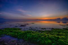 Green woll (Dhemas Aji Ramadhany) Tags: bali indonesia sanur pantaikarang flickrandroidapp:filter=none pantaikarangsanur