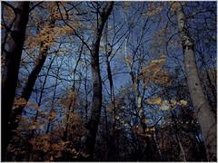 meanwhile (jarrowka ( )) Tags: park autumn trees jesień drzewa chorzów wojewódzkiparkkulturyiwypoczynku jarrowka favescontesttopseed favescontestfavored parkśląski