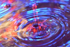 DSC_2162 (wolfjonny) Tags: water waterdrops makro wassertropfen