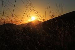 ... (MatteoHD82) Tags: life light sunset sea summer panorama sun mountain nature foglie relax landscape leaf wire tramonto mare estate natura erba luci sole montagna luce paesaggio vita fili filo solitudine