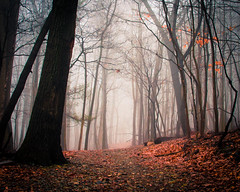 Foggy Trail (Thomas James Caldwell) Tags: trees winter mist leaves fog forest woods focus soft mt pennsylvania joy eerie spooky mount pa trail valley softfocus dreamy forge atmospheric 2014 photographyforrecreationeliteclub photographyforrecreationclassic
