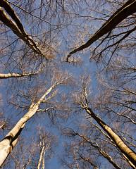 Trees (Vasilis Mantas) Tags: sky mountain tree greece macedonia select kilkis paiko ελλαδα goumenissa δεντρα griva kastaneri μακεδονια καστανερη παικο γουμενισσα γριβα