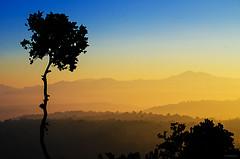 Dive Through The Gold! (_Amritash_) Tags: travel mountains sunrise landscape golden traveller tokina himalayas landscapephotography ultrawideangle shivalik garhwalhimalayas goldenblue outerhimalayas lesserhimalayas silhouettedtree himalayansunrise nikond7000 himalayanjungle divethroughthegold