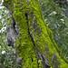 Pentax K-50 - Natureza 05