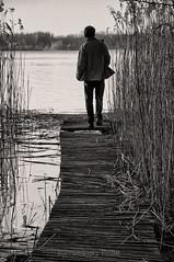 Untitled (Grzesiek.) Tags: reed most wielkopolska mostek jeziorogosawickie trzczicy