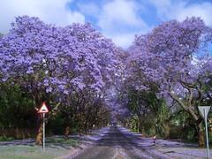 Пурпурный тоннель, Южная Африка