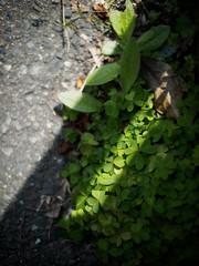 PhoTones Works #5032 (TAKUMA KIMURA) Tags: photones em1 takuma kimura 木村 琢磨 landscape scenery natural flower plant 風景 景色 自然 花 植物 木村琢磨