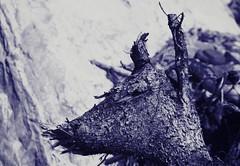 Deer Wood (Wild Pixel) Tags: tree deer stump lookalike