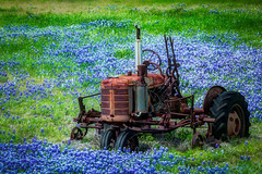 Tractor in Bluebonnets (lensletter) Tags: tractor vintage texas antique bluebonnets brokendown oldtractor texasbluebonnets bluebonnetfield fieldofbluebonnets topphotographygroup lensletter