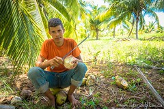 A young Cuban man, Daniel, sits amongst a pile of coconuts, carefully collecting them, and filling a bottle with their milk.