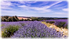 AL-Lavande-Valensole-20150626-013.jpg (Shoot Enraw) Tags: champs provence 26juin lavandes valensole 18200mmf3556 1116mmf28