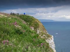 Bempton cliffs, June 2015. (Jonathan Fletcher Photography) Tags: uk england birds coast gulls yorkshire cliffs bbc puffin scarborough filey rspb bempton springwatch flamboroughhead jonathanfletcher fujixt1