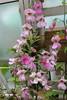 """Rehmannia elata - Botanischer Garten Berlin • <a style=""""font-size:0.8em;"""" href=""""http://www.flickr.com/photos/25397586@N00/19767861885/"""" target=""""_blank"""">View on Flickr</a>"""