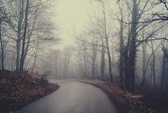 Solo nos cubren las ramas y las palabras (Samkale Bellacrux) Tags: woods bosque winter snow nieve invierno mist niebla misterious mood landscape wildlife stormy hoarfrost foggy