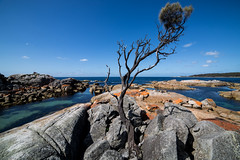 bay of fires (Keith Midson) Tags: binalongbay bayoffires tasmania coast tree eastcoast ocean sea seascape coastal shoreline rocky rocks