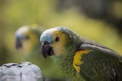 Verde verde (NetoRules) Tags: ixtapaluca estadodeméxico méxico mx