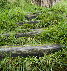 Beached Steps (tiki.thing) Tags: rosslare ireland green grass beach weathered wexford outside steps wood