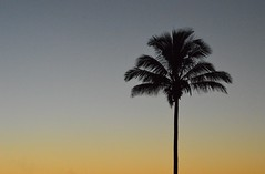 May 19th, 2013. (jaimie-leesmith) Tags: park sunset tree australia palm queensland emu