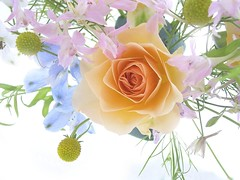 Flowers_-_a_spring_bouquet_with_a_rose (XandeCosta) Tags: wallpaper 1024x768