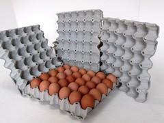 แผงไข่กระดาษ ถาดไข่กระดาษ pulp mold eggtray-2