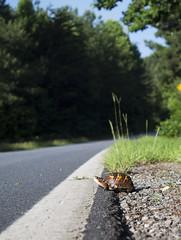 Columbus NC (Daniel Dyer) Tags: road flowers autumn sky mountain mountains love sc nature photography photo nc scenery driving asheville turtle daniel dyer ridge carolina productions blueridgeparkway carolinas