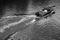 Fun (vilmaca) Tags: flowers light dogs boats virginia blackwhite kayaking potomacriver dogsitting trisland boatspotomacrivertheodorerooseveltisland