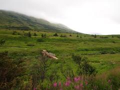 P7312637 (sopjh) Tags: nature alaska anchorage