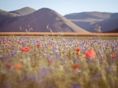tu me fais tourner la tete (*ilaria*aka*Lacollega*) Tags: flowers red italy mountains 50mm takumar bokeh blu f14 olympus poppi