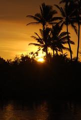 Fijian sunset (Marc Arnoud Rogier van der Wiel) Tags: sunset sky sun plant tree fiji pacific outdoor dusk palm serene